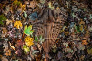 wooden rake in pile of leaves